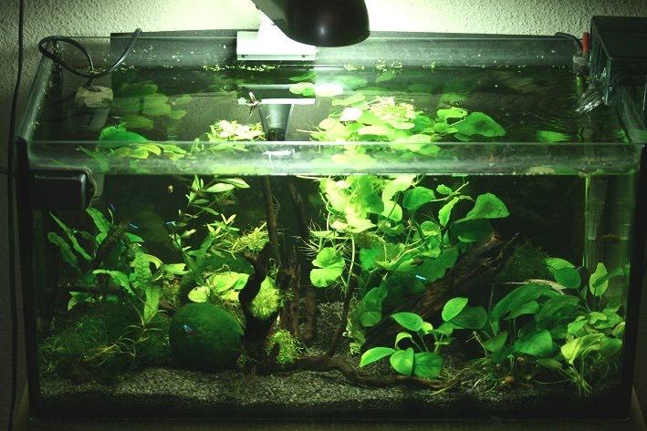 image aquarium eau douce best disque fish exotique aquarium eau douce csp with image aquarium. Black Bedroom Furniture Sets. Home Design Ideas
