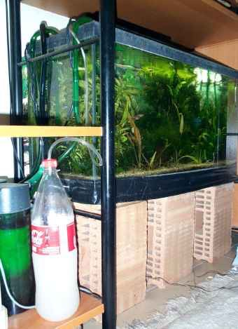 co2 injecter du gaz carbonique dans son aquarium aquariums de v ronique. Black Bedroom Furniture Sets. Home Design Ideas