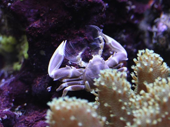 crab2577