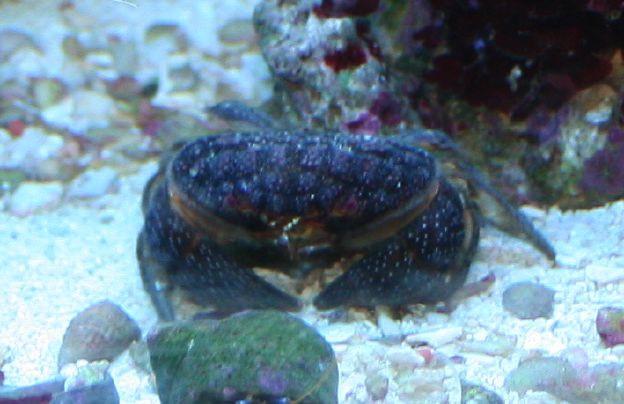 crab6879