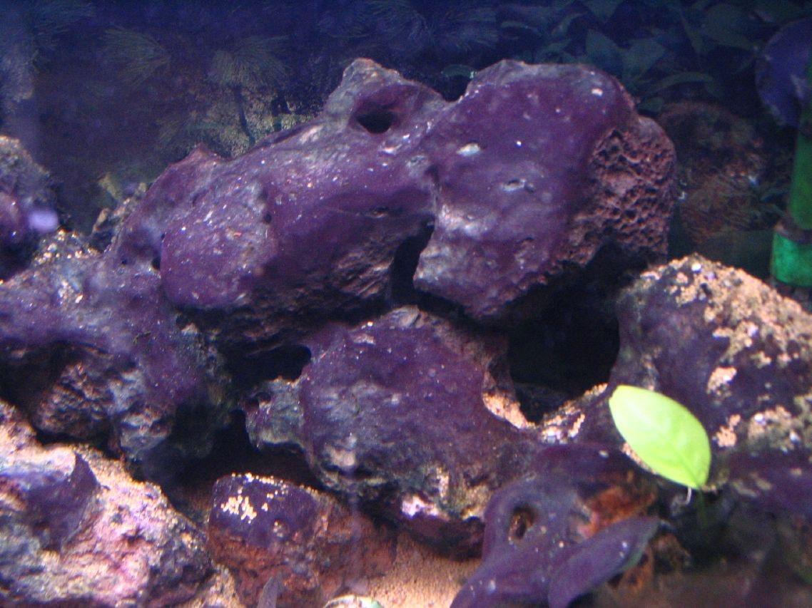 algues cyano � aquariums de v233ronique