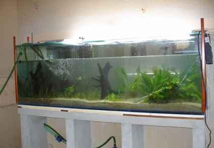 Construire un grand aquariums de v ronique for Construire un aquarium