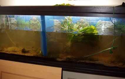 Construire un grand aquarium 1 200 litres aquariums for Construire un aquarium