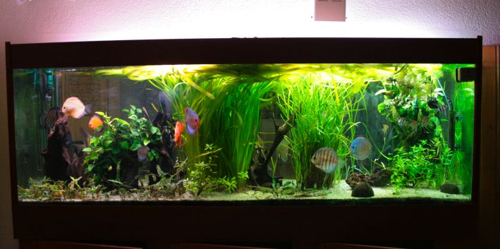 Qu 39 est ce qu 39 un aquarium amazonien l 39 histoire de mon for Modele bac a poisson
