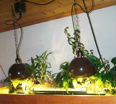 L'éclairage de l'aquarium Hql