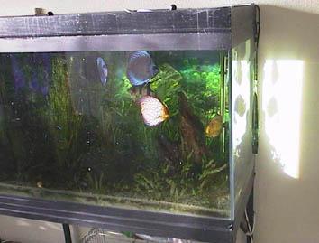 filtre anti uv aquarium. Black Bedroom Furniture Sets. Home Design Ideas