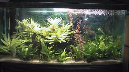 décoration aquarium asiatique